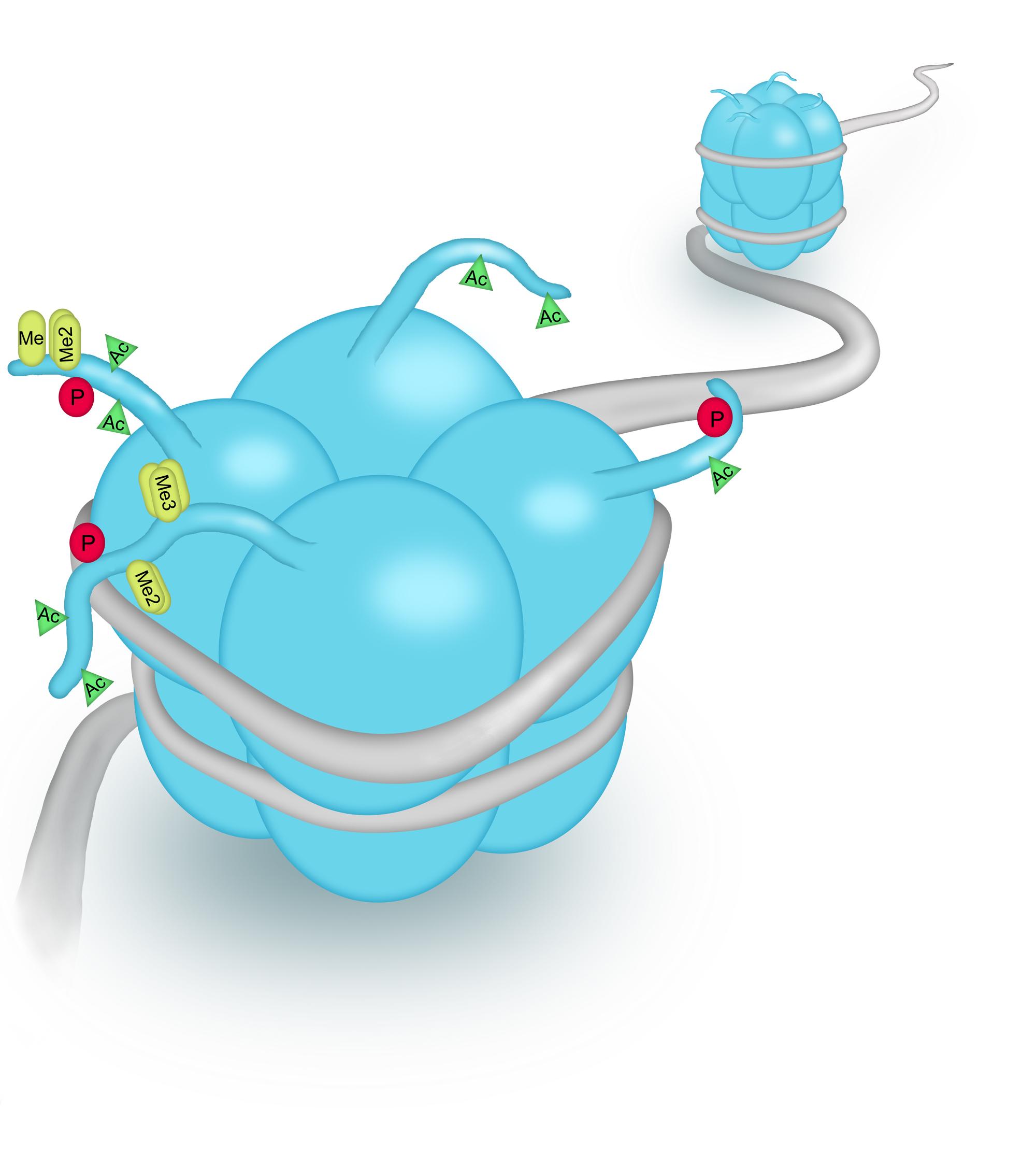 Modified Histones