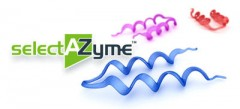 Enzyme Screening Kits - selectAZyme™