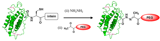 Site-specific modification of Recombinant Proteins