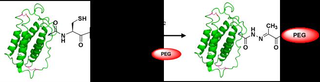 Peptide Conjugation